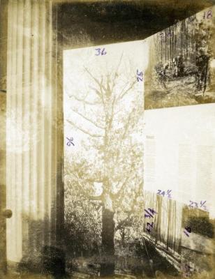 The Morton Arboretum 50th anniversary standalone or traveling exhibit, Research panel