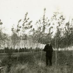 Clarence E. Godshalk in experimental plot, poplars