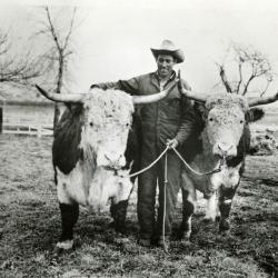 Oxen at Arboretum