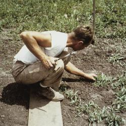 Ray Schulenberg planting plugs in the prairie