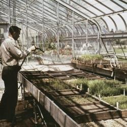 Ray Schulenberg watering prairie plugs in the greenhouse