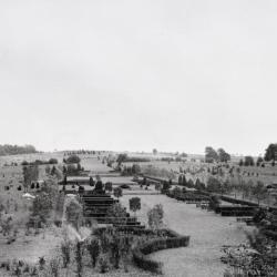 East view, Arboretum Hedge Garden