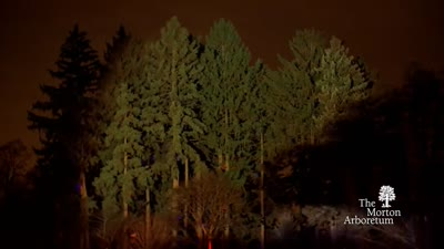 Highlights from Illumination - Tree Lights at The Morton Arboretum