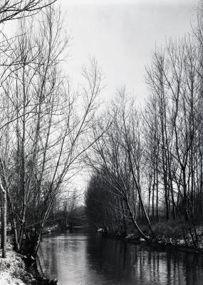 Trees along riverbank of DuPage River in winter