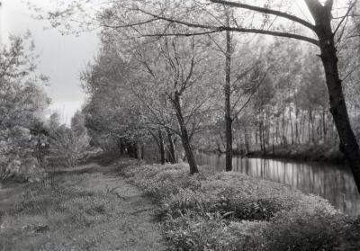 Grass path along east side of DuPage River, south of Arboretum bridge