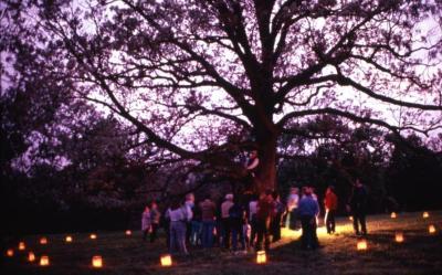 Twilight Tree Walk: Craig Johnson sitting in white oak with crowd below