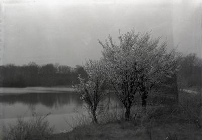 East end of Lake Marmo with Prunus subhirtella in bloom
