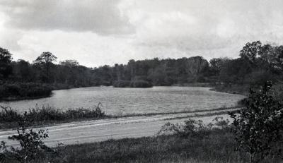West end of Lake Marmo from unpaved Lake Road