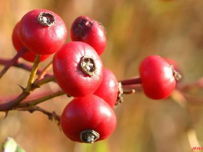 Berries on stem