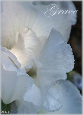 Extreme close-up view of a white iris