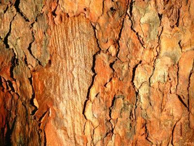 Close-up of tree bark, scaly