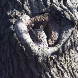 Owl in tree hollow