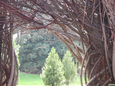 "Patrick Dougherty Sculpture ""Xanadu,"" window"