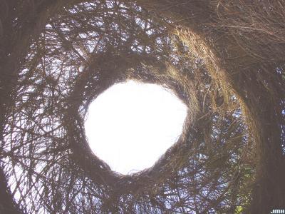 "Patrick Dougherty Sculpture ""Xanadu,"" interior"