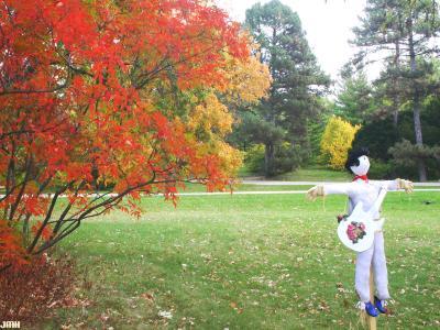 Elvis Scarecrow, fall color