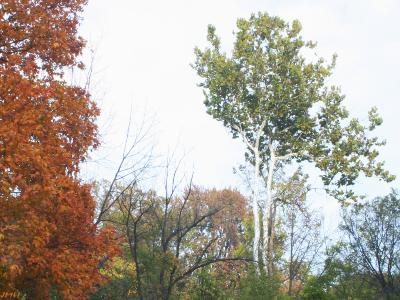 Fall color near west side of Lake Marmo