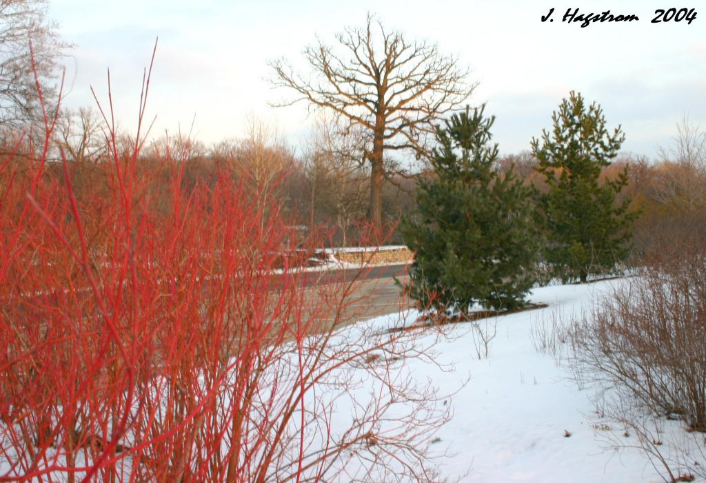 Road and parking area lined with trees and shrubs, winter