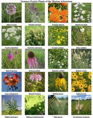 Summer Prairie Plants
