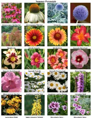Summer Perennials 02