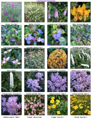Late Summer Perennials 02