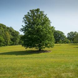 Bulb Meadow in Summer