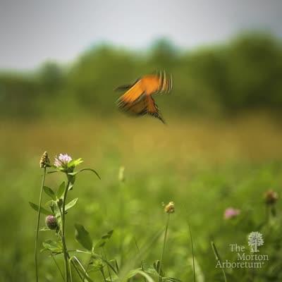 Butterfly in Parking Lot 29