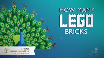 Nature Connects, How Many Lego Bricks