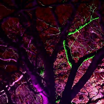 Crown of Light, focus on tree