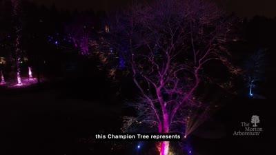 Illumination, Behind the Scenes: Champion Tree