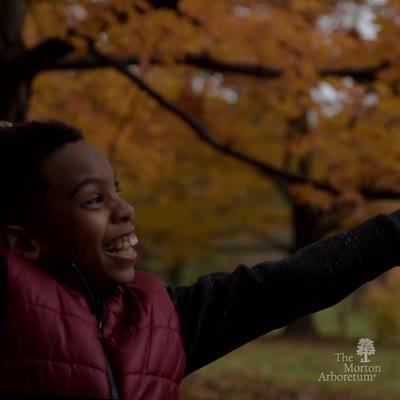 Fall Color, October, short video