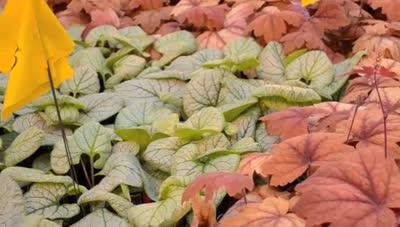 Arbor Day Plant Sale