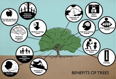 Benefits of Trees Illustration