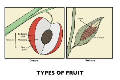 Types of Fruit Illustration