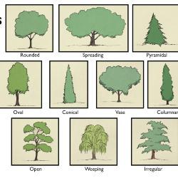 Tree Habits Illustration