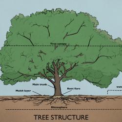 Tree Structure Illustration