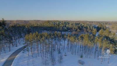 The Morton Arboretum, Winter Scenery video