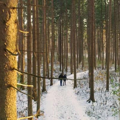 Spruce Plot in Winter video, Instagram
