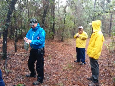 Seed collection in Gulf State Park, Alabama, 2015