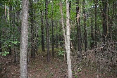 Quercus oglethorpensis (Oglethorpe oak), habitat
