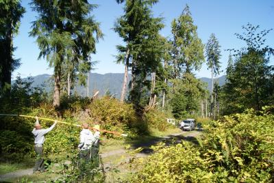Seed collecting in Olympic National Forest