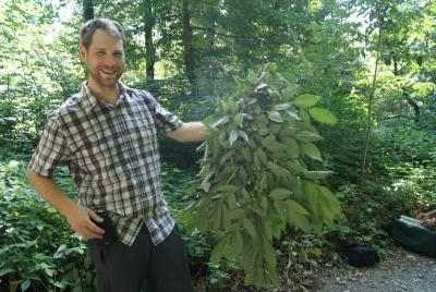 Peter Zale with branch of Diospyros lotus