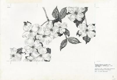Cornus florida = [graphic] Flowering dogwood / Nancy S. Hart.