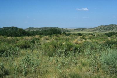 Ericameria nauseosa (Rabbitbrush), habitat