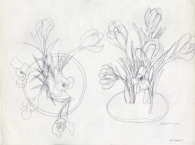 Crocus study sketches [graphic] / N.S. Hart.