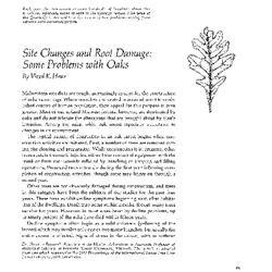 Notes on the Bartram oak : Quercus heterophylla, Michx.