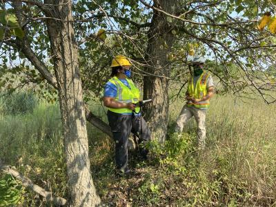 2020 Tree Census field crew taking measurements (3)