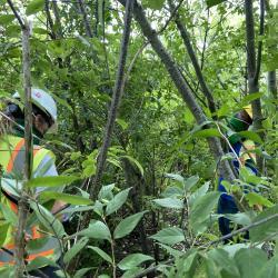 2020 Tree Census field crew taking measurements in Plot 4180 (2)