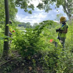 2020 Tree Census field crew taking measurements (5)