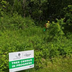 2020 Tree Census field crew taking measurements (1)