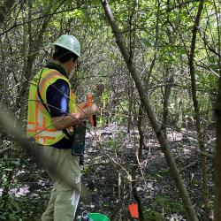 2020 Tree Census field crew taking measurements in Plot 3012